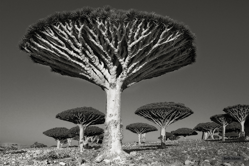 © Beth Moon – Diksom Forest  copy